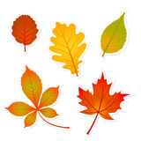 Autumn leaves stickers Royalty Free Stock Images