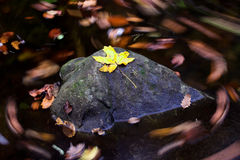 Autumn leaves on the stone Stock Image