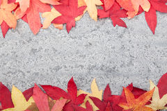 Autumn leaves on stone background. Colourful autumn leaves on grey limestone background Stock Photography