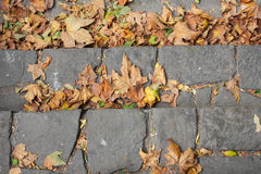 Autumn leaves on the stone pavement Royalty Free Stock Photo