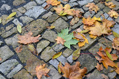 Autumn leaves on the stone pavement. Yellow and green autumn maple leaves on a stone bridge in park in Prague Royalty Free Stock Photos