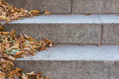 Autumn leaves on stone stairs Royalty Free Stock Image