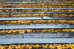 Autumn leaves on stone steps. Royalty Free Stock Photo