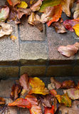 Autumn Leaves On Stone Steps Stock Image