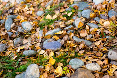 Autumn leaves with stones Stock Image