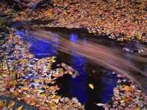 Autumn leaves in stream. Flowing in water Royalty Free Stock Photos