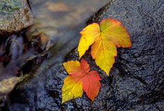 Autumn leaves by a stream Royalty Free Stock Image
