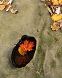 Autumn Leaves in Stream. Fallen autumn leaf in hole in rock Stock Images
