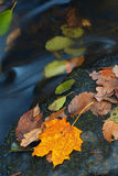 Autumn leaves in stream stock photo