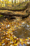 Autumn leaves in a stream bed. Royalty Free Stock Photos