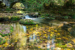 Autumn leaves in a stream. With a bridge Royalty Free Stock Photo