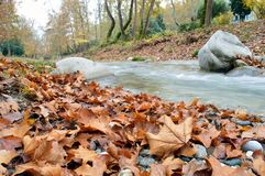 Autumn leaves beside the stream. Close-up of beautiful autumnal leaves Î¿n the ground of a park near a small stream royalty free stock photos