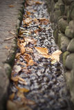 Autumn leaves in the stream Royalty Free Stock Image
