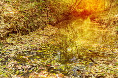 Autumn leaves on stream Royalty Free Stock Image