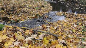 Autumn leaves in the stream stock video