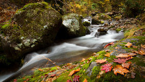 Autumn leaves on a stream Royalty Free Stock Photography