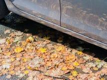 Autumn leaves on the street stock photos