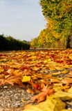Autumn leaves on a street Royalty Free Stock Image