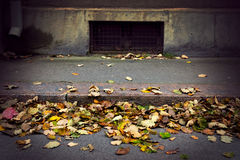 Autumn leaves on street Stock Images