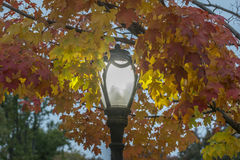 Autumn leaves street lamp Royalty Free Stock Images