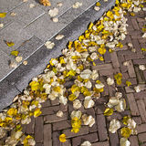 Autumn leaves on street and pavement Stock Images