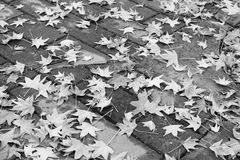 Autumn Leaves street Royalty Free Stock Image