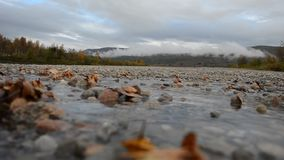 Autumn leaves stuck in cold river stream with forest and misty background stock video
