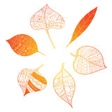 Autumn leaves. Stylized orange leaves lying in a circle. A round logo with leaves. Plants with ornaments. Royalty Free Stock Image
