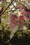 Autumn Leaves su chiude la riserva di Chamna, Richland, WA fotografia stock libera da diritti