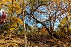 Autumn Leaves su San Gabriel River Fotografia Stock Libera da Diritti