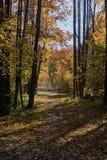 Autumn Leaves su un percorso Fotografie Stock Libere da Diritti