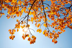 Autumn leaves with sun Stock Photo