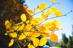 Autumn Leaves in Sun Stock Images