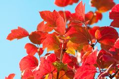Autumn Leaves with sun rays Stock Images