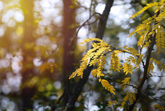 Autumn leaves with sun rays Stock Photography