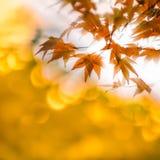 Autumn leaves with sun rays, very shallow focus.  stock photos