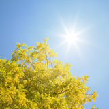 Autumn leaves with sun shining Stock Photos
