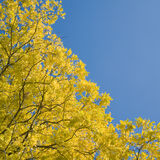 Autumn leaves with sun shining Royalty Free Stock Photo