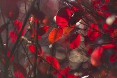 Autumn leaves. The autumn sun shining leaves Stock Photos