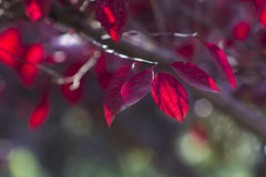 Autumn leaves. The autumn sun shining leaves Stock Photo