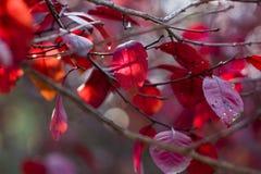 Autumn leaves. The autumn sun shining leaves Royalty Free Stock Photos