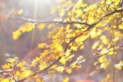 Autumn leaves with sunbeam stock photos