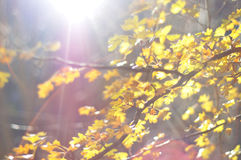 Autumn leaves with sunbeam stock photography