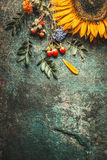 Autumn leaves and sunflower on dark rustic background, top view Stock Photo