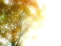 Autumn leaves in sunlight Stock Photos