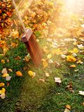 Autumn leaves in sunlight beam Stock Photos
