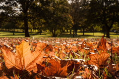 Autumn leaves sunlight field Royalty Free Stock Photography