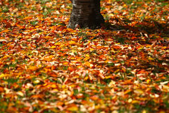 Autumn leaves in sunlight Royalty Free Stock Image