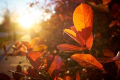 Autumn leaves in sunlight Stock Images