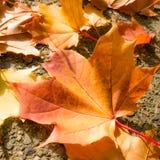 Leaves on sidewalk Stock Photo